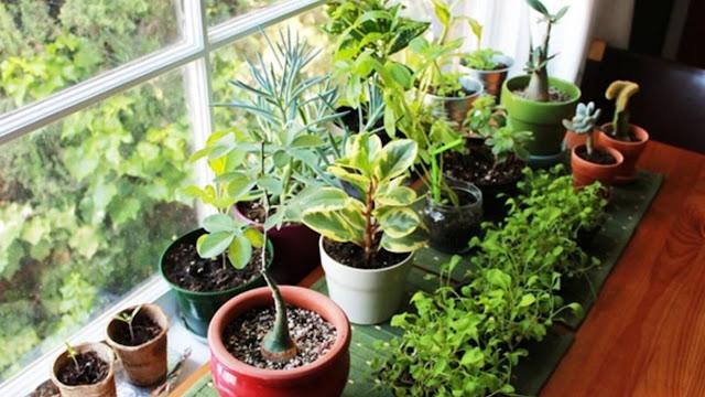 أفضل انواع النباتات المنزلية التي تعطي المنزل رونقا خاص الجزء الاول