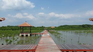 Konservasi Mangrove di Desa Pasarbanggi