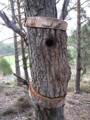 Caixa niu feta amb un tronc