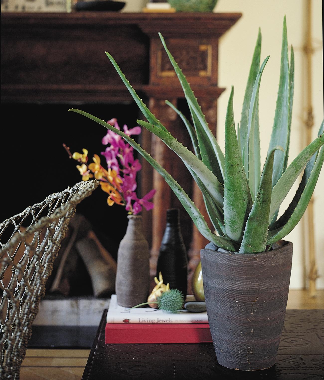 El blog de los pe otes plantas de interior purificadoras - Cuidados planta aloe vera casa ...