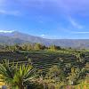 Rumah Tengah Sawah Destinasi Baru di Malino,  Merasakan Keindahan Alam Natural