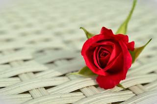arti atau makna bunga warna merah