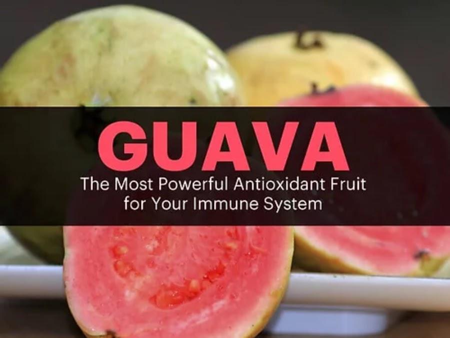 Guava, Powerful Antioxidant
