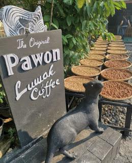 Café Pawon, café de Civeta o Luwak.