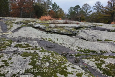 Panola Mountain Moss