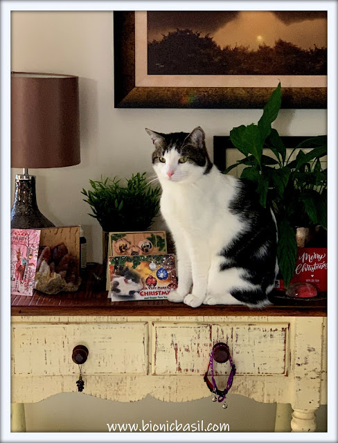 Melvyn Says Thank Mew For All The Catmas Cards  ©BionicBasil® The Pet Parade 385