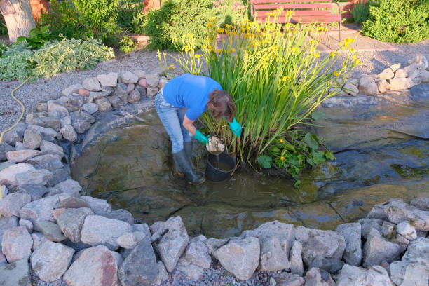 Building a Fish Pond – And Caring for It