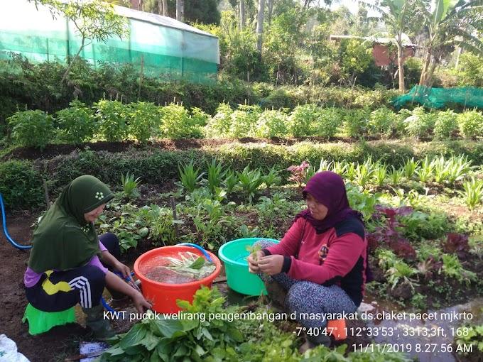 Menginisiasi Pertanian Organik, Cara Perempuan Petani Menyelamatkan Lingkungannya