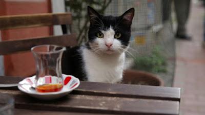 film o kotach
