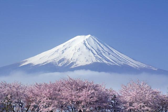 Chùm ảnh đẹp Hoa Anh Đào Nhật Bản vào tháng 02/2020 19