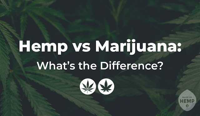 Hemp vs Marijuana: What's the Difference?