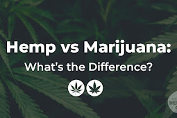 Hemp vs Marijuana: What's the Difference?