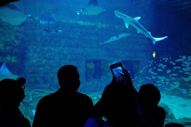 Seaworld Orlando Photo by Julien Delaunay on Unsplash