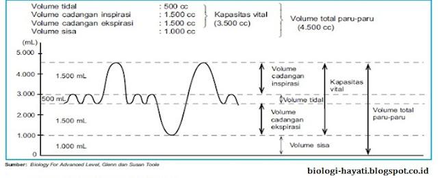 Gambar 8. Grafik volume udara pernapasan.