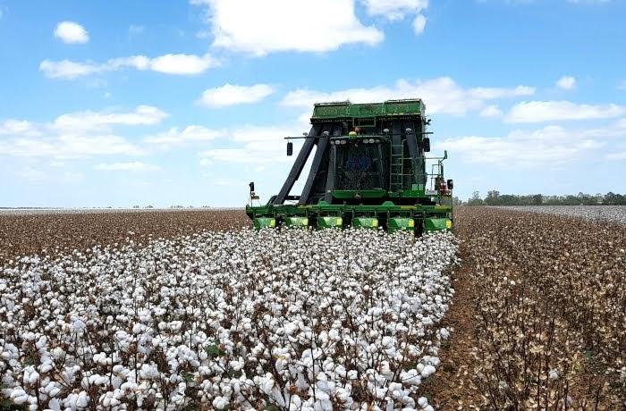 6η Γεωργική προειδοποίηση βαμβακοκαλλιέργειας