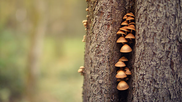Mushrooms on a trunk indicate serious tree illness