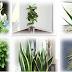 Plante care sunt adevărate bombe de oxigen. Țineți cel puțin una în locuința voastră ca să curețe aerul!