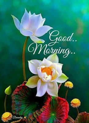 Good Morning All Wishs.