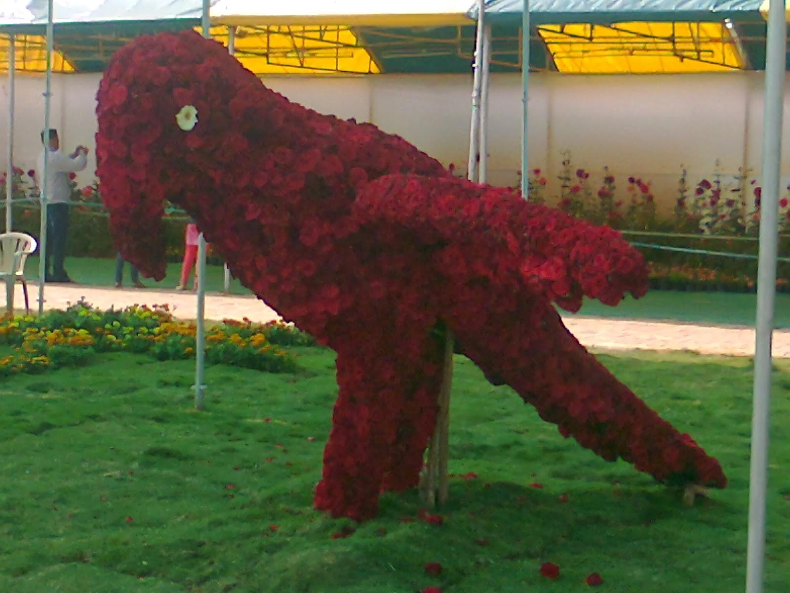 rose flower parrot in ahmedabad flower show
