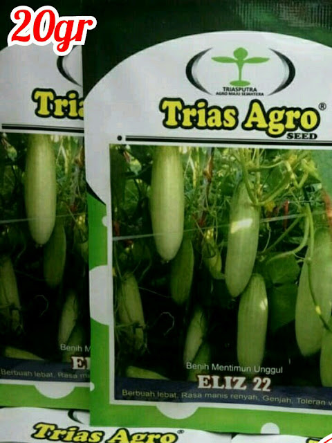 Benih Mentimun Putih Unggul ELIZ-22 Produk Trias Agro Seed