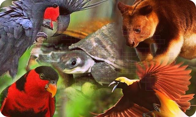 Inilah Enam Satwa Endemik Papua Paling Sering Diperdagangkan
