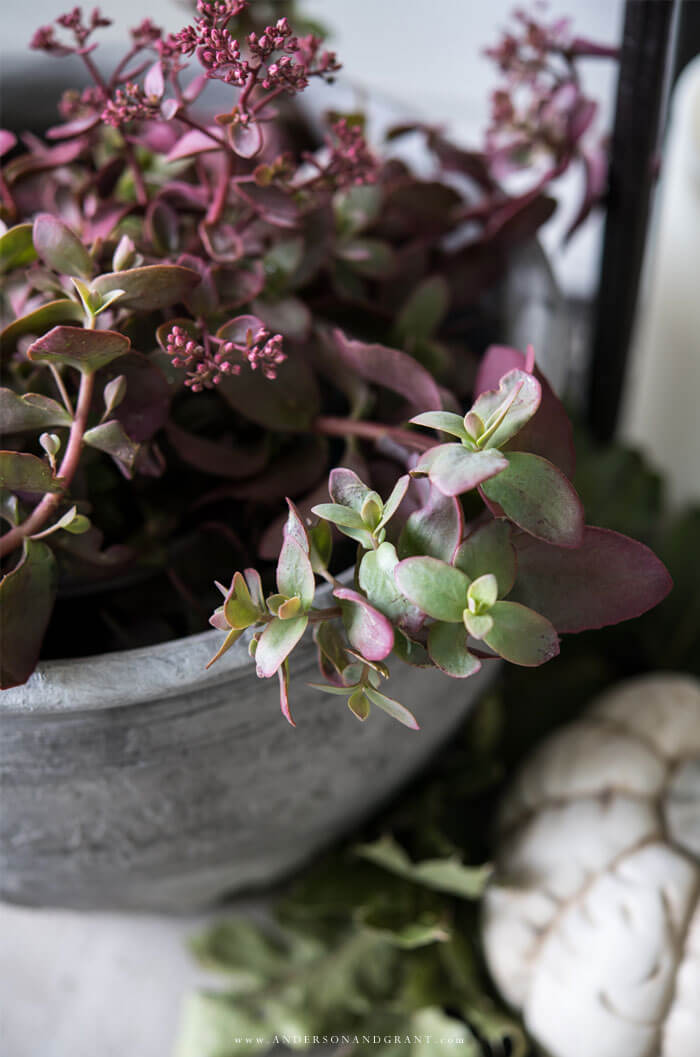 Decorate your fall front porch with seasonal plants.