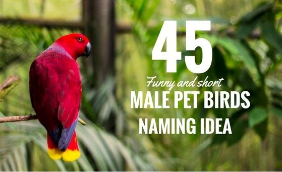 45+ Beautiful Male Pet Bird Names Idea