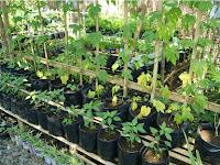 Menggunakan Polybag Sangat Cocok Untuk Bertanam Di Lahan Sempit