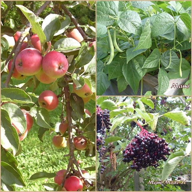 Harvest - Ernte