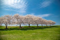 Springtime - Photo by LuAnn Hunt on Unsplash