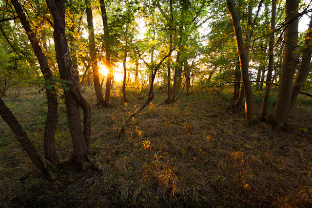 Monks Wood in the warm evening light in Cambridgeshire