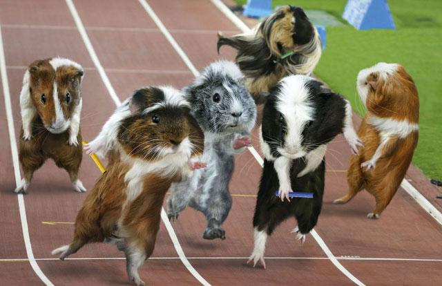 Balap Hamster
