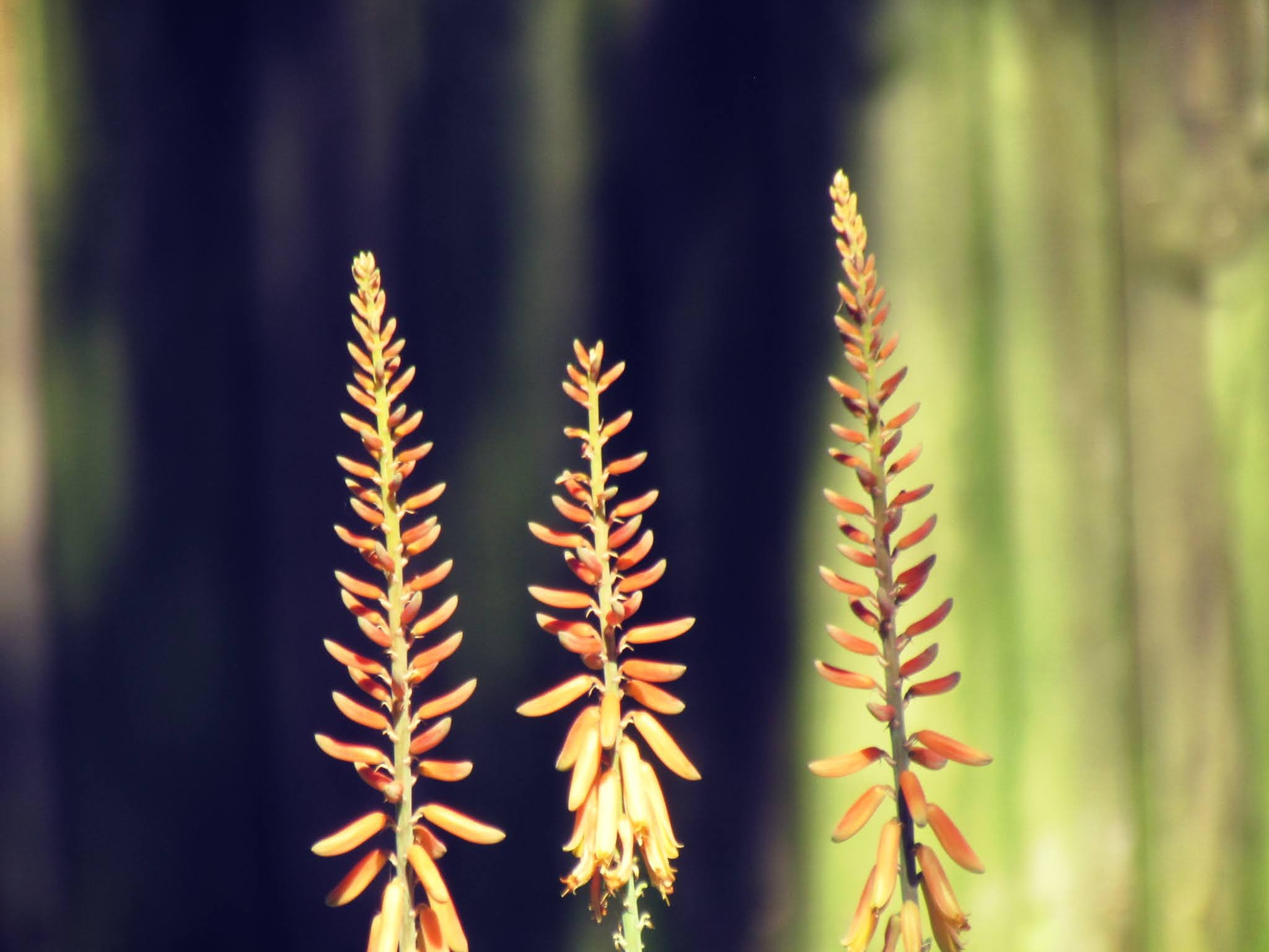 Weeds in a picture, pregnancy plants in Florida, invasive plant species, native Florida plants