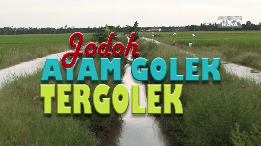 Sinopsis Telemovie Jodoh Ayam Golek Tergolek