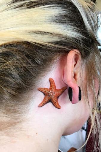Este colorido estrela-do-mar