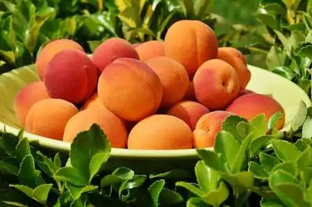 Responsive image, Apricot to improve eyesight