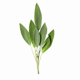 Medicinal Herb: Sage. Primarily for -- inflammation of mouth and throat, indigestion, menopausal symptoms, boost memory, and improve mood. 31Daily.com