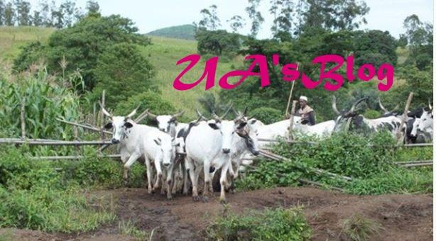 Herdsmen killings: CSOs shutdown NASS over alleged misappropriation of cattle ranch fund