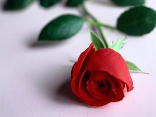 صورة ورد رومنسي احمر