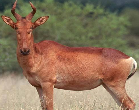 muslim singles in antelope Reem name meaning in urdu & english reem is a muslim baby girl name, it is an arabic originated name reem name meaning is gazelle, white antelope and the lucky number associated with reem is 7.