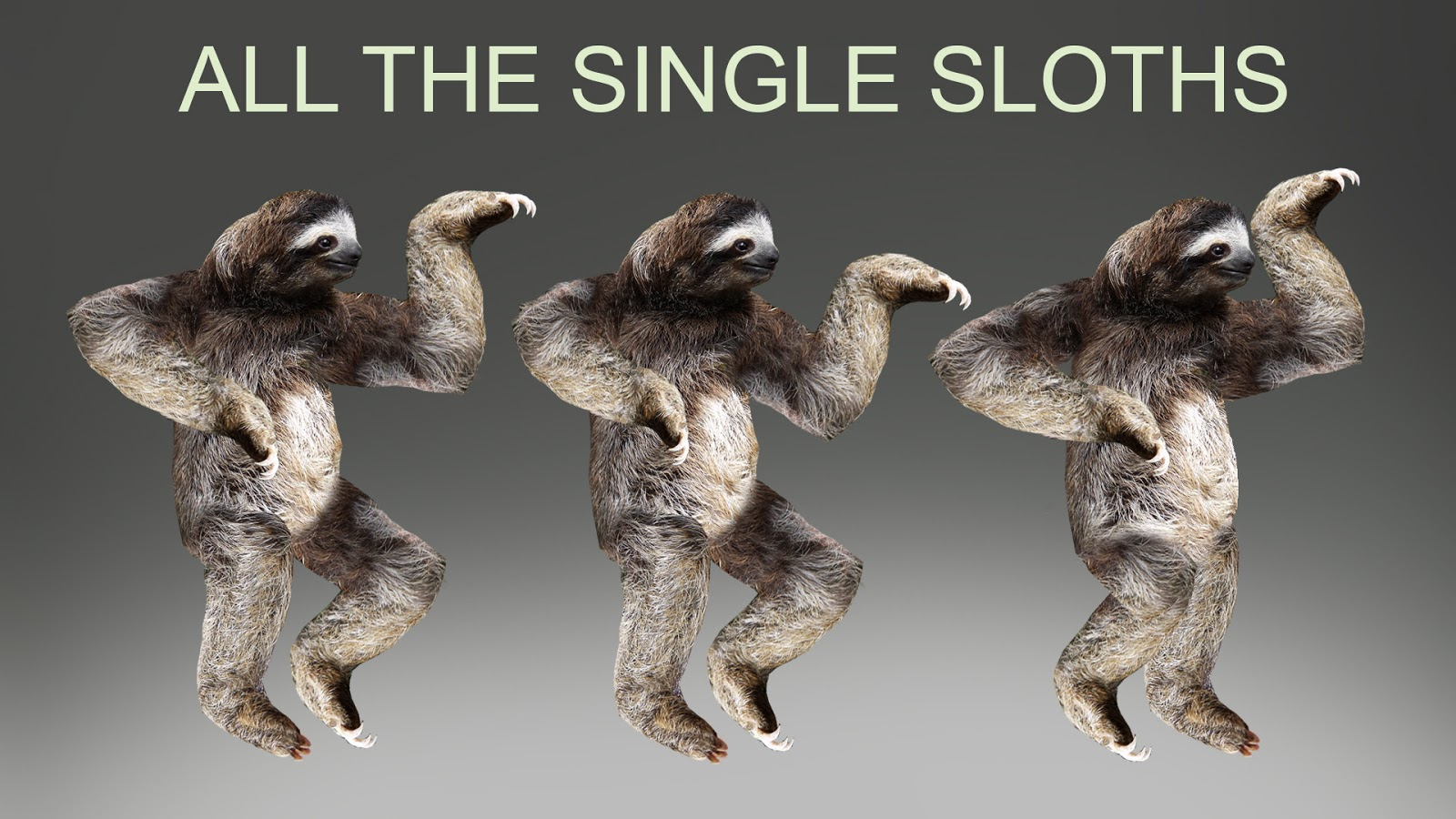 Sloth Wallpapers