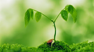 tumbuhan, komponen biotik