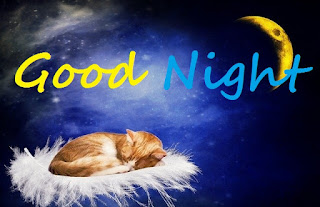 cute cat good night images