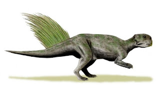 Numerous fossil graveyards around the world are not anomalies easily dismissed. Numerous Psittacosaurus fossils support the Genesis Flood.