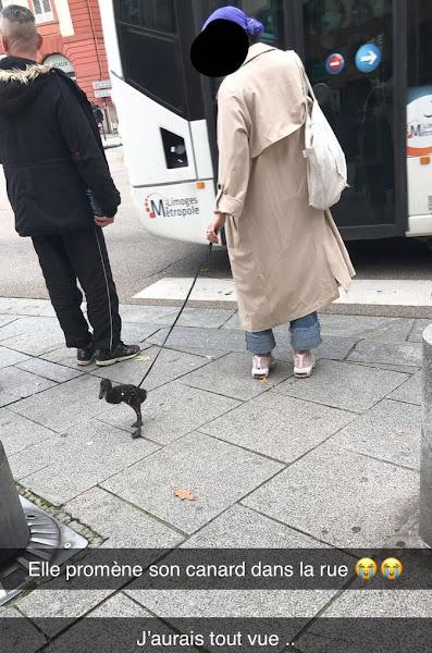 VIDEO INSOLITE : Une femme balade son canard en laisse dans la rue à Limoges
