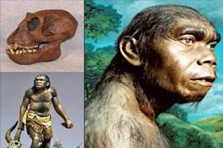 manusia purba homo soloensis