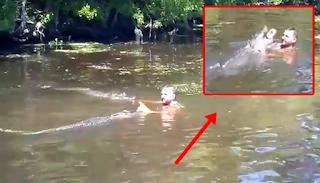 Mengerikan, Pria ini Berenang Dengan Buaya Lalu Terjadi Hal yang Mengejutkan