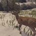 """Deer Hunter  """"Kids Stories.online"""""""
