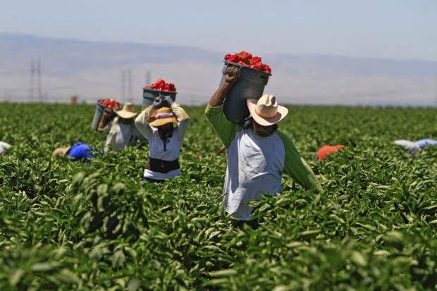 Ούτε 10% της τελικής αξίας των προϊόντων δεν μένει τελικά στον αγρότη