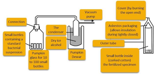 Image: lyophilization process
